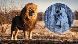 Златан застрелил африканского льва и забрал домой кожу, череп и челюсть. Он сравнивает охоту с наркозависимостью