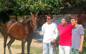 В Венесуэле похитили и съели коня, побеждавшего в престижных соревнованиях по скачкам