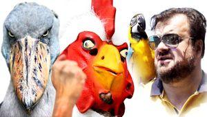 Баклан на «Зенит Арене», петухи Франции и «пернатые» фамилии. День птиц в спорте: фото