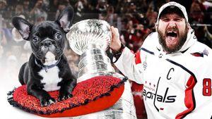 В Америке разгневаны тем, что из Кубка Стэнли покормили собак. Овечкин наполнял его черной икрой