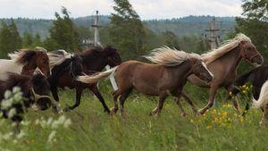 Злоумышленник сжег 9 лошадей живьем: дикая история изЛенинградской области