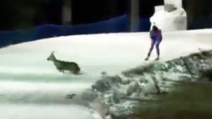 Перед Юрловой-Перхт во время спринта на этапе КМ в Нове-Место пробежала косуля: видео