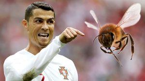Роналду пропустил матч сборной из-за укуса пчелы. Какие еще нелепые травмы получали футболисты