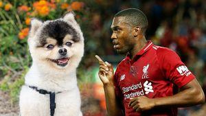 Рэпер обвинил Старриджа втом, что футболист невыплатил вознаграждение завозвращенного пса