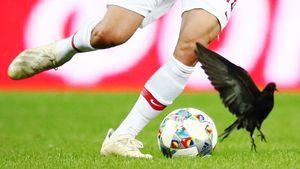 Нашествие пернатых, Дзюба — Бог футбола и первый гол Нойштедтера за сборную: главные кадры из Сочи