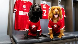 «Бристоль Сити» презентовал новую форму при помощи собак