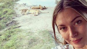 Селфи сдикими животными, фото спрезидентом ипосещение школы: лучший отпуск Марии Шараповой
