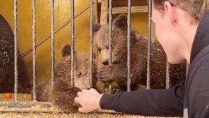 Хоккеист Каменев спровоцировал драку между медвежатами в зоопарке: видео