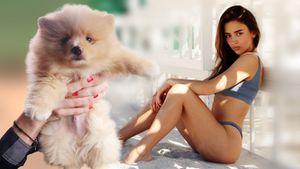 Два скандала в Америке за неделю. Жена русского хоккеиста Волкова попала в приключения со своей собакой